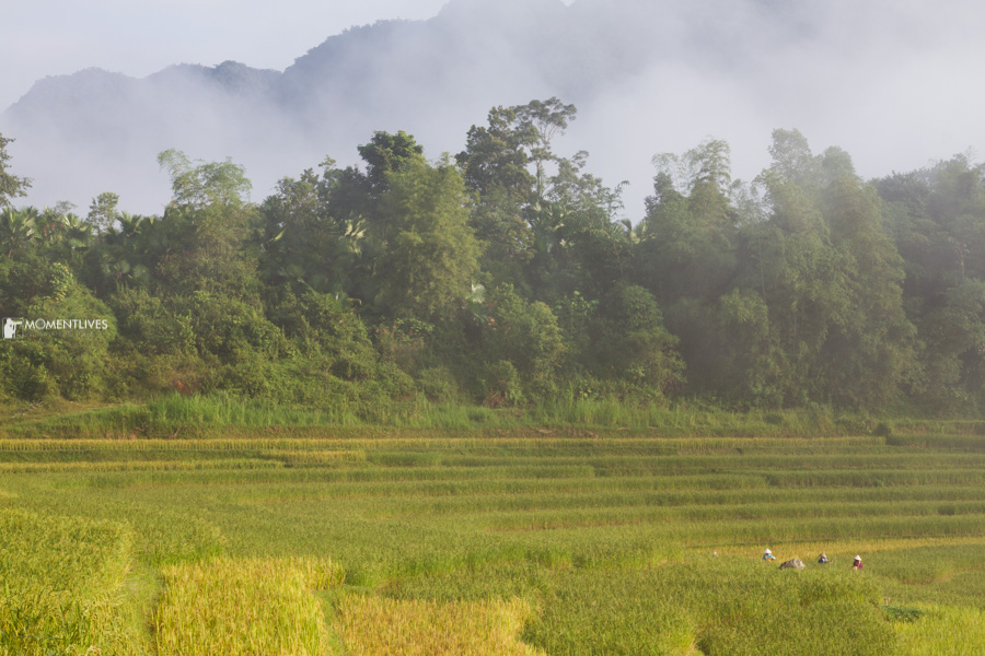 The rice terraces of Pu Luong