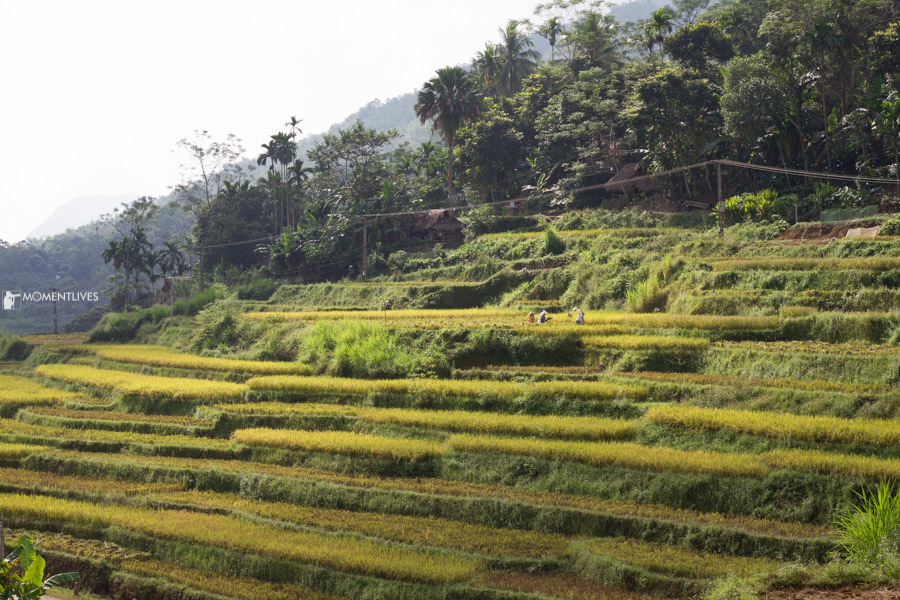 A photo tour that captures the rice terrace
