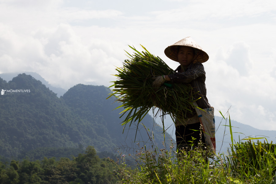 Our photo tours bring people to the rice terrace of Vietnam
