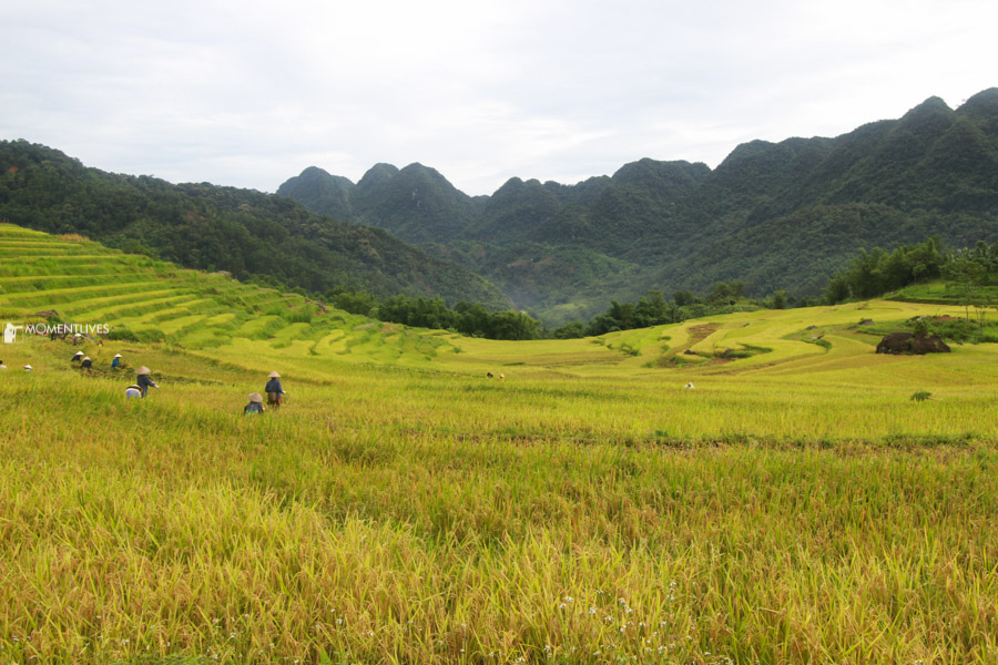 Panoramic of the rice terraces captured during our photo tour