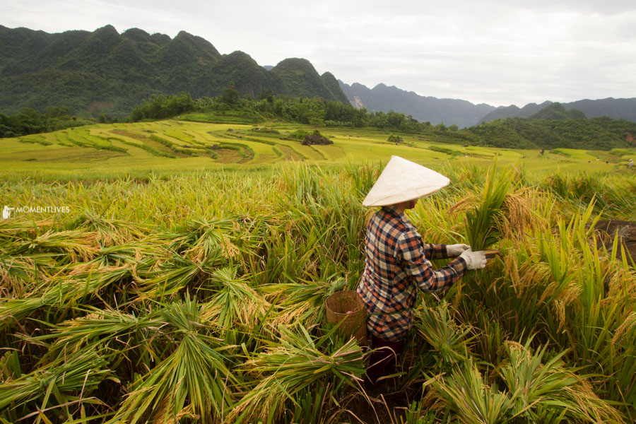 Photography tour to the rice terrace of Pu Luong